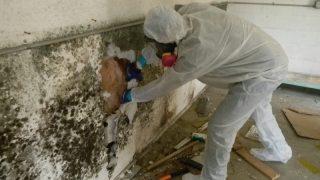 Cách khắc phục, sửa chữa nhà bị ẩm mốc